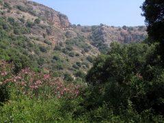 PikiWiki_Israel_48367_Nerium_oleander_at_Nahal_Betzet