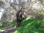 נחל הקיני 6 - צילם בר זוהר יאיר