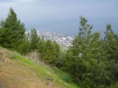 יער שוויץ. צילום:דר אבישי טייכר. מתוך אתר פיקיוויקי