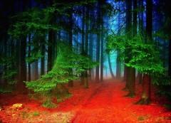 Black-Forest (Custom)