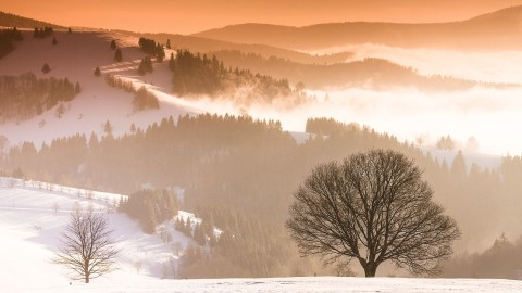 winter-in-the-black-forest-in-germany(Custom)