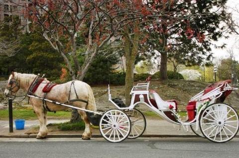 מסע פרטי קסום בסוס ובעגלה בלב סנטרל פארק