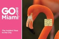 כרטיס 'GO מיאמי'