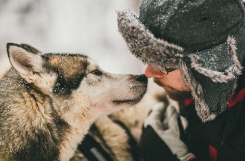 להתיידד עם כלבי האסקי - קרדיט קשרי תעופה