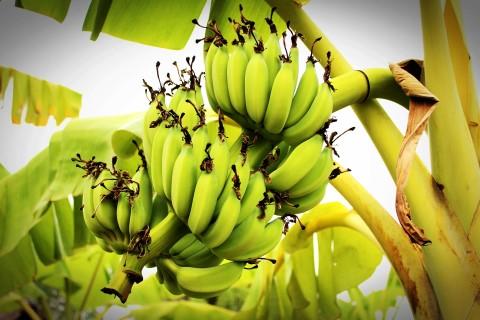 מסלול טיול בעמק הירדן בעקבות פסטיבל הבננה טעם כנרת
