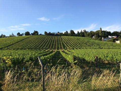 סיור טעימות יין על אופניים מחוץ לווינה