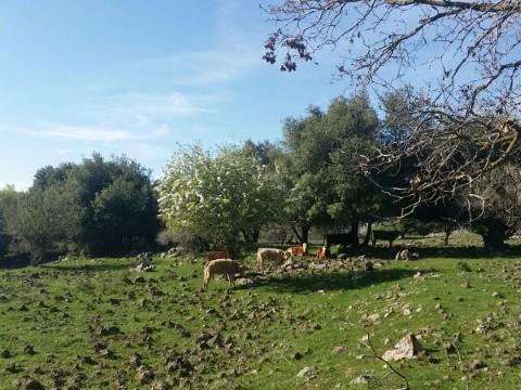 המלצה על  מסלול טיול ביער מהאגדות בצפון רמת הגולן