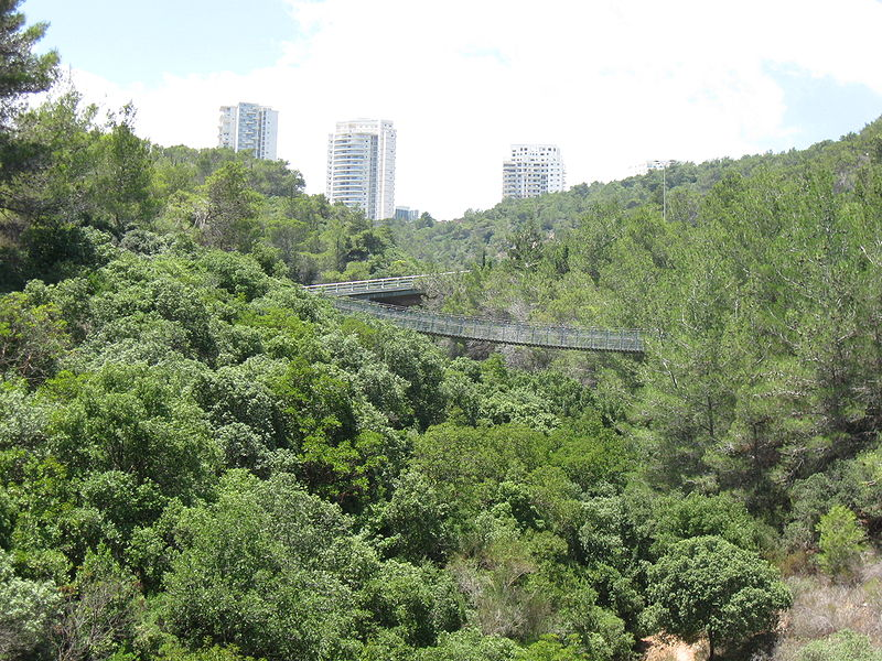 הגשר התלוי בפארק נשר