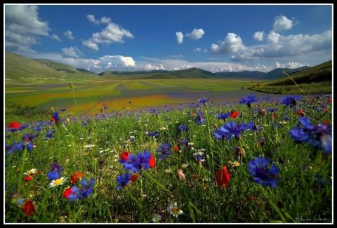 נוף פרחים ליד פרוג'ה