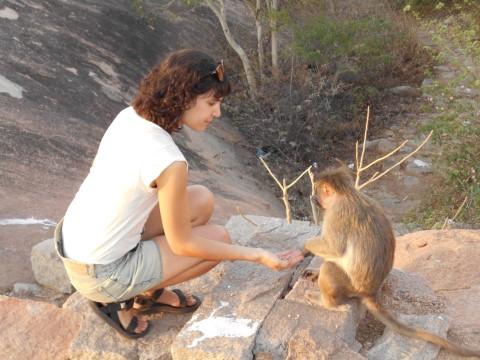 במקדש האנומן מאכילים קופים