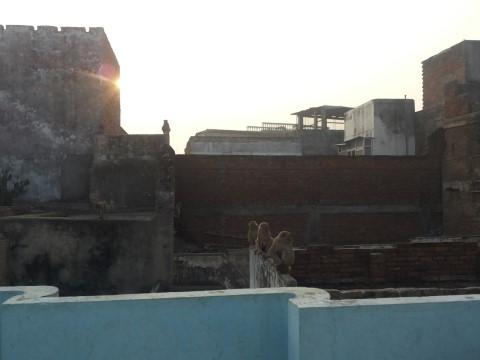 מה קורה על גגות הקסבה בוראנסי