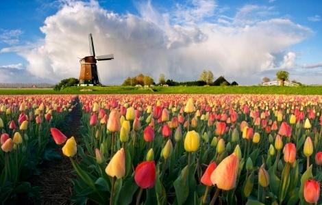 טחנות רוח הולנדיות ויום-טיול כפרי מאמסטרדם הכולל טעימות גבינה באדאם.