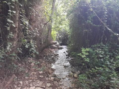 15 דקות מכליל - אחד הנחלים היפים בארץ - פתוח לציבור הרחב.