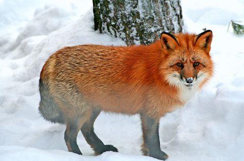 מגוון חיות יפהפיות בגן החיות - קרדיט קשרי תעופה