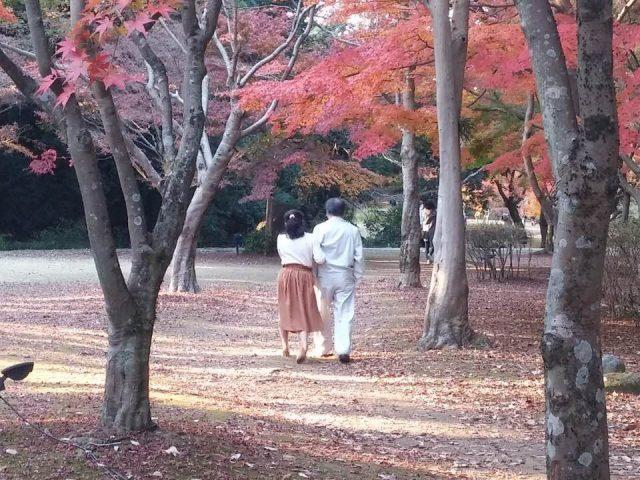 יפן - מסלול טיול בשלכת