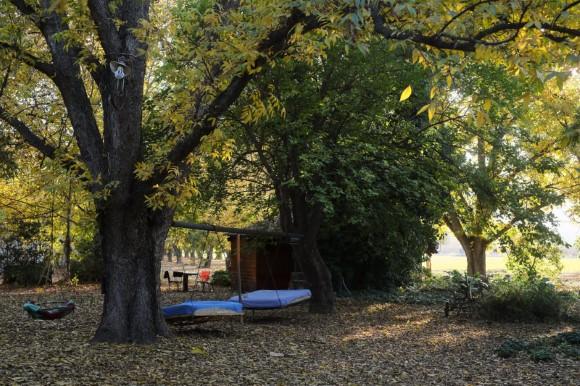 מקומות בישראל שאפשר להתארח\ללון בהם, עם חיית מחמד