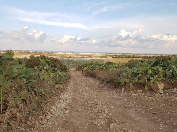 מקטע 14 של שביל ישראל: מחניון לילה פתחת נחל אורן לצומת עופר