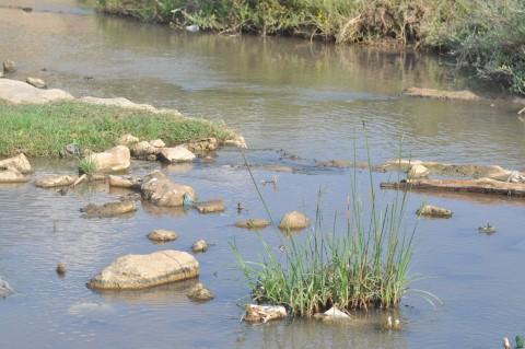 נחל ציפורי, בקטע ליד נופית - אורן פלס. מתוך אתר פיקיוויקי