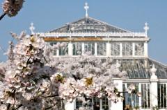 גן בוטני בלונדון