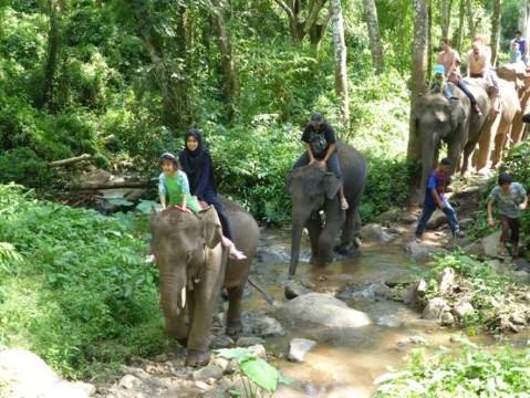 רכיבה על פילים - צילמה סיגלית בר